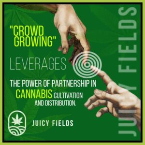 E Grower werden mit JuicyFields - Top Rendite mit Cannabis Crowdgrowing