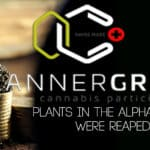 Cannergrow | Plants in the Alpha Room successfully harvested