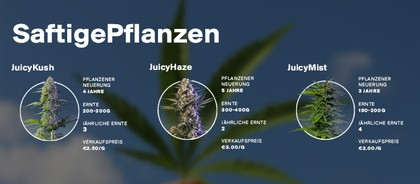 Juicy Fields | We strengthen our position in Colombia